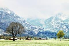 Arbre dans les prés neigeux, temps d'avril Froid et humidité images libres de droits