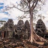 Arbre dans les ventres Phrom, Angkor Vat, Cambodge Photo stock