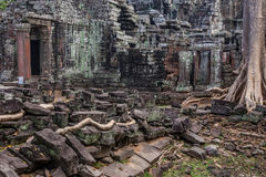 Arbre dans les ventres Phrom, Angkor Vat, Cambodge Photographie stock