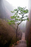 Arbre dans un chemin de montagne Photographie stock libre de droits