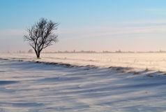 Arbre dans un domaine snow-covered Photos stock