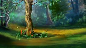 Arbre dans une forêt dense en été Images stock