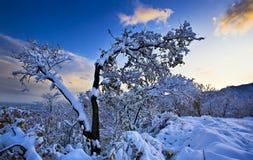 Arbre dans une neige Photos stock