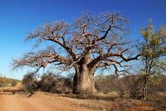 Arbre de Baoba Photographie stock libre de droits