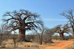 Arbre de baobab dans l'horizontal africain photo libre de droits