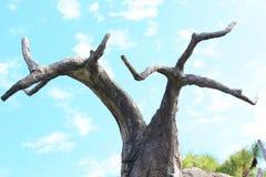 Arbre de Boab (gregorii d'Adansonia) Images libres de droits