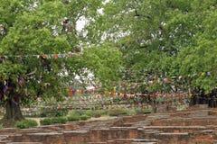 Arbre de Bodhi dans Lumbini (le lieu de naissance de Bouddha) Image libre de droits