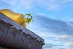 Arbre de Bodhi et x28 ; Religiosa& x29 de ficus ; Élevage des pieds de Bouddha d'or Images libres de droits