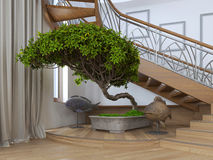 Arbre de bonsaïs à l'intérieur d'une maison privée avec s décoratif Image libre de droits