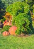 Arbre de bonsaïs d'éléphant dans le jardin Image libre de droits