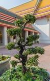 Arbre de bonsaïs en Wat Pho Kaew, Bangkok, Thaïlande Image libre de droits