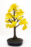 arbre de bonzaies images stock