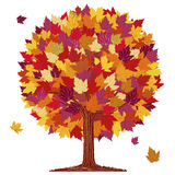 Arbre de boule de feuille d'automne Photographie stock