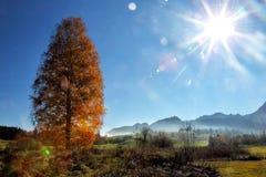 Arbre de bouleau en automne Photo libre de droits