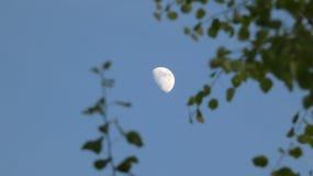Arbre de bouleau et aub?pine Beith et Huathe sous une lune de ressort en Angleterre 2 photo libre de droits
