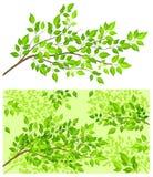 Arbre de branchement avec la lame verte illustration libre de droits