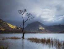 Arbre de Buttermere Photographie stock