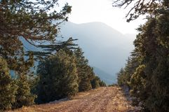 Arbre de Cedrus, labani Chemin vers Elmali, région de la Turquie Forêt conifére Image stock