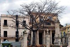 Arbre de Ceiba à vieille La Havane image libre de droits