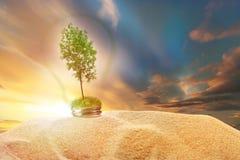 Arbre de cendre verte à l'intérieur de lampe en sable sur le ciel de coucher du soleil image stock