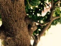Arbre de cerfs communs Photographie stock libre de droits