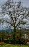 Arbre de châtaigne sans feuilles en hiver avec le ciel nuageux dans un village avec des montagnes à l'arrière-plan images libres de droits