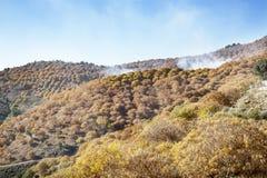 Arbre de châtaigne sous le soleil d'automne et un ciel bleu avec des nuages Photographie stock libre de droits