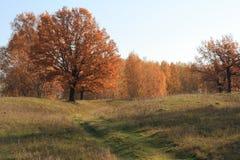 Arbre de chêne. Photo stock