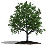 arbre de chêne illustration stock