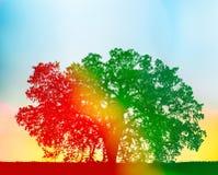 Arbre de chêne coloré Photographie stock libre de droits