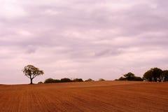 Arbre de chêne dans le domaine avec le ciel nuageux Image stock