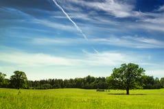 Arbre de chêne en été Images libres de droits
