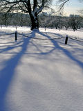Arbre de chêne en hiver image libre de droits