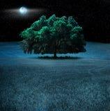 Arbre de chêne la nuit Image libre de droits