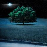 Arbre de chêne la nuit Images libres de droits