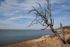 Arbre de chêne nu en hiver Image stock