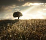 Arbre de chêne solitaire au coucher du soleil Photographie stock libre de droits
