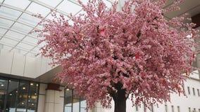Arbre de Cherry Blossom ou de Sakura devant le centre d'affaires banque de vidéos