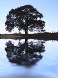 Arbre de chêne d'automne Images libres de droits
