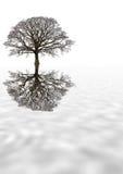 Arbre de chêne de l'hiver Photographie stock