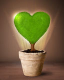 Arbre de coeur d'Eco sortant du pot de fleurs Images stock