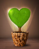 Arbre de coeur d'Eco sortant du pot de fleurs Image stock