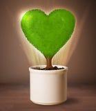 Arbre de coeur d'Eco sortant du pot de fleurs Photographie stock libre de droits