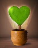 Arbre de coeur d'Eco sortant du pot de fleurs Photographie stock