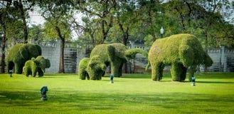 Arbre de conception de coupe de forme d'éléphant sur le champ vert photos libres de droits