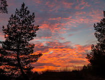 Arbre de conifère sur le fond des nuages roses Photographie stock libre de droits
