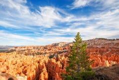Arbre de Coniferus au point de coucher du soleil - Bryce Canyon National Park Photographie stock libre de droits