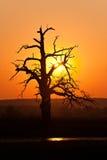 Arbre de coucher du soleil photos libres de droits