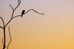 Arbre de coucher du soleil Image libre de droits