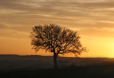 Arbre de coucher du soleil Photo stock